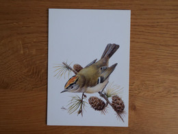Buzin Maximumkaart Goudhaantje 2424 - 1985-.. Birds (Buzin)