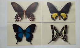 Papillon. Butterfly. - Butterflies