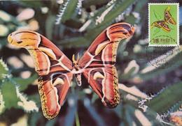 Maximum Card Taiwan Taipeh 1962 Butterfly Papillon Same Stamp  As The Card  Attacus Edwardsi - Taiwan