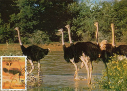 Maximum Card Djibouti  1877  Autruches Ostrich - Djibouti