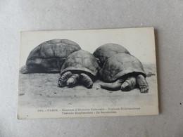 Paris Museum D'Histoire Naturelle Tortues éléphantines Ile Seychelles - Schildpadden