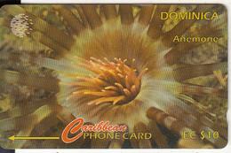 DOMINICA(GPT) - Anemone, CN : 9CDMA/C(Ll, Normal 0), Tirage %9600, Used - Dominica