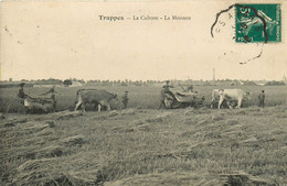 78* TRAPPES  Les Moissons        RL09.0238 - Cultivation