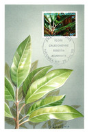 Thème Flore - Nouvelle Calédonie - Carte Maximum - TB - Heilpflanzen