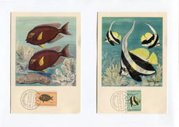 1955 - 6 Cartes Maximum - Poissons De Mozanbique - Plasmarine - Labo La Biomarine Dieppe - Léon Burg - - Mozambique