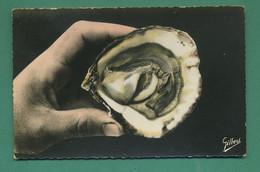 La Marennes ( Huitre ) CPSM 9 X 14 Cm - Fish & Shellfish