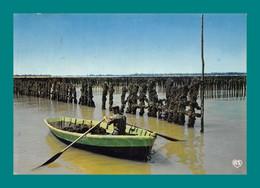 Parcs A Moules Mytiliculture Bouchots - Fishing