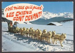 116519/ Attelage De Chiens De Traîneau - Cani