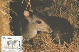 MAXIMUM CARD SLOVACCHIA 1988 (ZY639 - Other