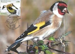 CARTE MAXIMUM - MAXICARD - MAXIMUM CARD - PORTUGAL (MADEIRA) - EUROPE 2019 - OISEAUX -CHARDONNERET - Carduelis Carduelis - Sperlingsvögel & Singvögel
