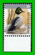 BUZIN - 4925** Garrot à Oeil D'or / Brilduiker - 1985-.. Pájaros (Buzin)