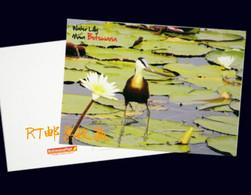 Botswana Postal Card Postcard Wetlands River Wildlife Africa Animals Nature Bird Fauna Birds Water Lily Plants Flowers - Botswana