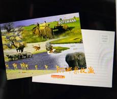 Botswana Postal Card Postcard Wetlands River Wildlife Africa Animals Nature Bird Fauna Birds Elephant Mammals - Botswana