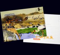 Botswana Postal Card Postcard Wetlands River Wildlife Africa Animals Nature Bird Fauna Birds Zebra Mammals Environment - Botswana