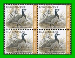 BUZIN - 4912** Bernache Nonnette / Brandgans - 1985-.. Vogels (Buzin)