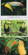 ~~ 3 CP De Toucans Costa Rica & Zoo San Diego) - Birds