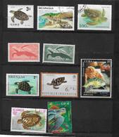 311 TPE - TORTUES - 10 TIMBRES OBLITERES TORTUES MARINES - Schildkröten