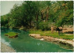 OMAN - The Valley Of Nizwa - Oman