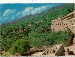 OMAN - Palm Trees In Nizwa - Oman