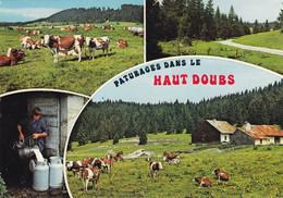 25. AGRICULTURE. ELEVAGE. PATURAGE DANS LE HAUT DOUBS. ANNEE 1980 + TEXTE - Allevamenti