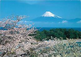 Japon - Mont Fuji - Mount Fuji And Cherry Blossoms - Cerisiers En Fleurs - Voir Timbre Japonais - Nippon - CPM - Voir Sc - Altri
