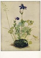 """925  Albrecht Dürer, """"L'ancolie"""": Entier (c.p.) D'Allemagne - German Painter, Printmaker, Engraver. Columbine Plant - Engravings"""