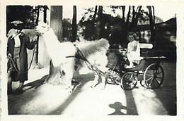 130221 - PHOTO - JEU JOUET ANCIEN Enfant Bebe Attelage Lama Caleche Cirque Zoo - Giocattoli Antichi