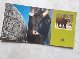 Attelage  De Vaches SALERS. AUVERGNE - Andere