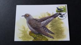 """BUZIN - Carte Oiseaux CM : Numéro Nouveauté """"Coucou Gris"""" - 2011-.."""