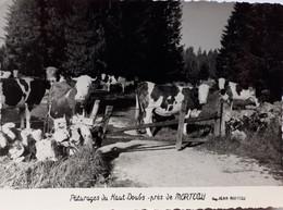 Pâturages Du Haut Doubs Près De Morteau - Vaches - Otros Municipios