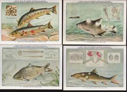 9 KAARTEN PARASIETEN DER VISSEN    3 SCANS - Fish & Shellfish