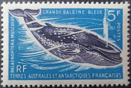 R2441/7 - 1966 - T.A.AF. - N°22 NEUF** - Unused Stamps