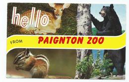 Devon Postcard Hello From Paignton Zoo With Bear Deer Chipmunk Posted 1964 - Bären