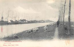 Brugge Bruges  Damse Vaart In Koolkerke Bij Brugge Schapen Met Schapen Herder Le Canal De Damme    M 7066 - Brugge