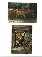 Lot De 6 Cartes Thème Vache - Cows