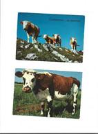 Lot De 8 Cartes Thème Vache - Cows