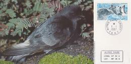 Carte  Maximum  1er  Jour   T.A.A.F    Oiseau  :  Pétrel  Tempête    1997 - Cartas