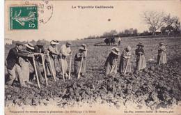 Vignoble Gaillacois, Préparation Des Terrains Pour La Plantation - Gaillac