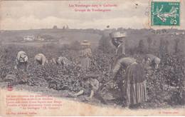 Vignoble Gaillacois, Groupe De Vendangeurs - Gaillac