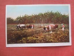 Plowing On A Cuban Sugar Plantation      Cuba   Ref 4678 - Cuba