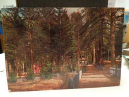 Cartolina Foresta Di Fossiata Longobucco Prov Cosenza 1973  Sila Bellezze Di Calabria - Cosenza