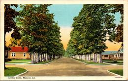 Louisiana Monroe Lovers Lane 1946 Curteich - Other