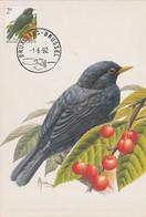 BUZIN. LE MERLE NOIR - 1985-.. Uccelli (Buzin)
