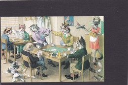 Anthropomorphic Cat Card  -    Cats Playing Cards. - Gatos