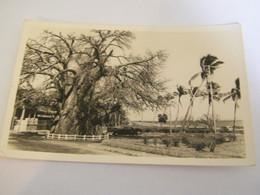 CPA - Afrique - Madagascar - Majunga - Le Baobab Et La Corniche - Habitation - Automobile - 1920  - SUP - (EN 66) - Madagascar