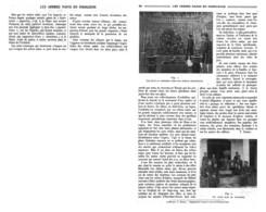 LES ARBRES NAINS ( BONSAI )  En INDOCHINE     1924 - G. Bonsai