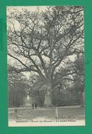 CPA ESSONNE 438/403  - BRUNOY, Forêt De Sénart, Le Chêne Prieur - Brunoy