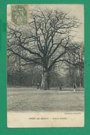 CPA ESSONNE 443/403  - BRUNOY, Forêt De Sénart, Le Chêne D'Antin - Brunoy