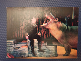SOVIET CIRCUS. 1979. Hippo - Circo