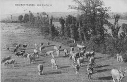 2 CPA De Pâturages. 1- Nos Montagnes, Une Vacherie Et  2- Pâturages Dans Les Montagnes Du Doubs. Bon état. - Unclassified